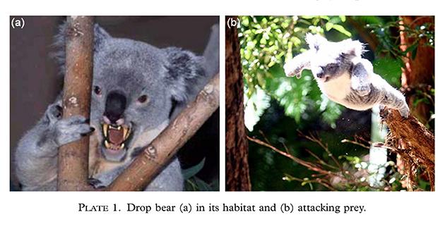drop-bear-image